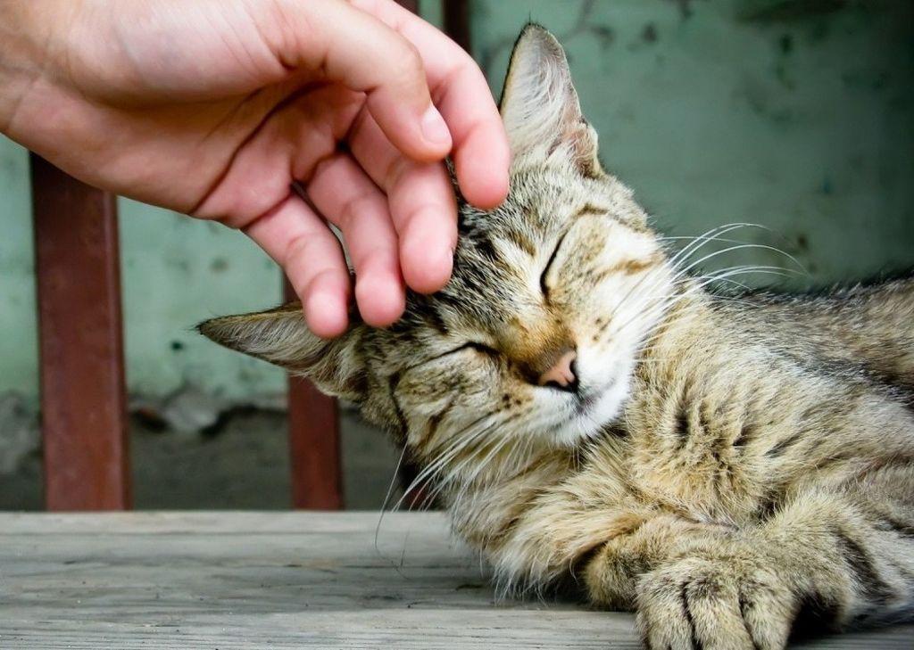 Грубое отношение к животным недопустимо