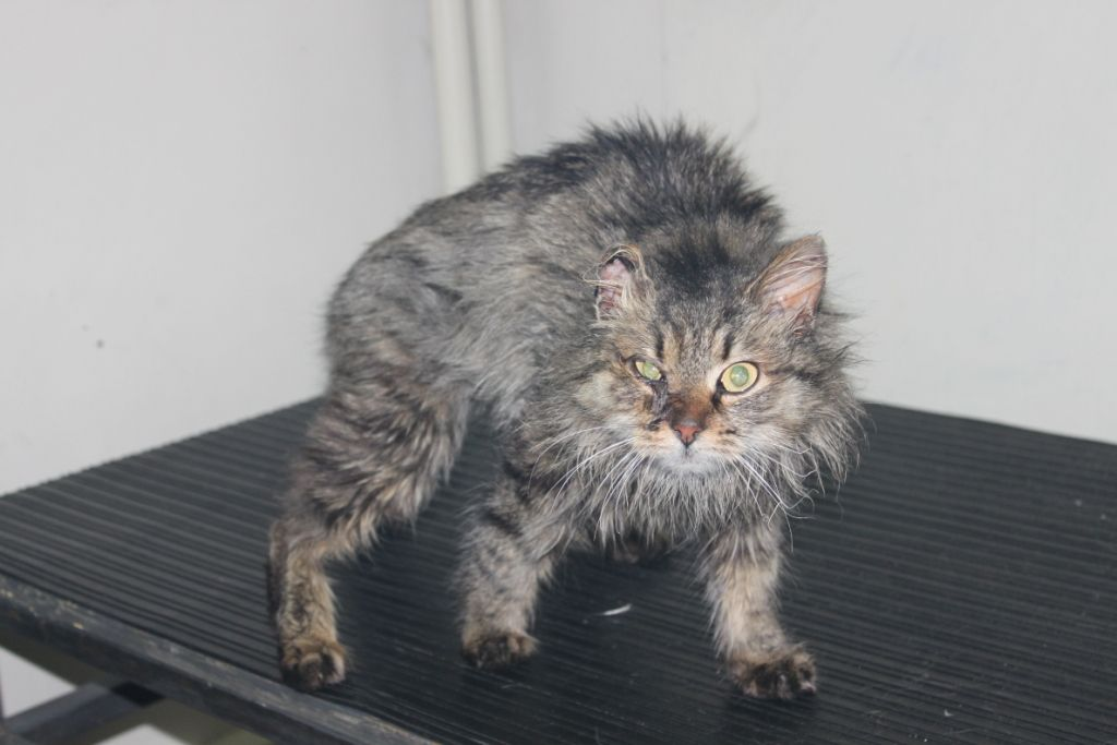 Кошка может постоянно орать при видимых повреждениях и травмах