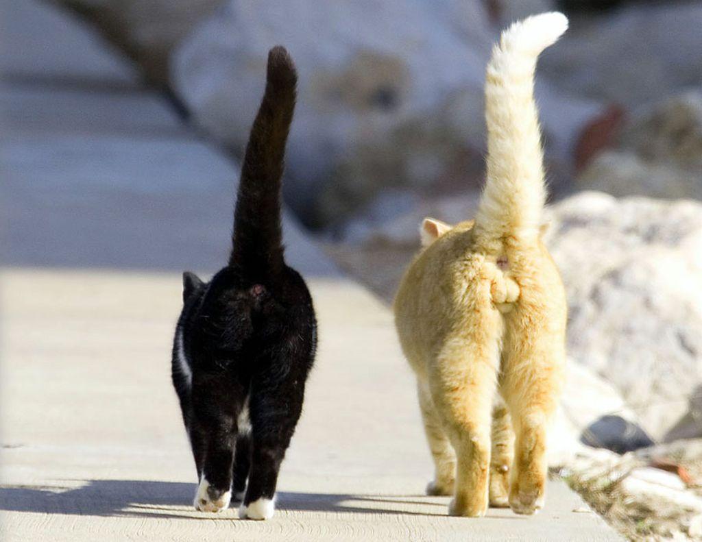 Нельзя четко сказать кто лучше, кот или кошка