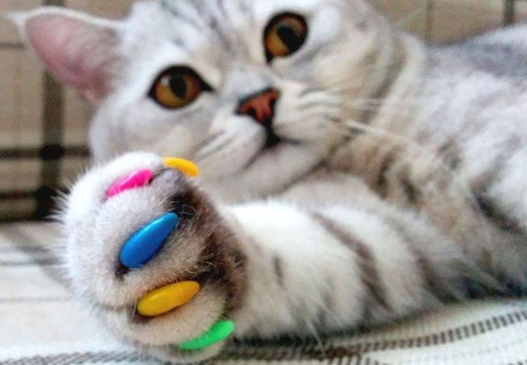 Накладки на когти особенно актуальны когда кошка дерет мебель