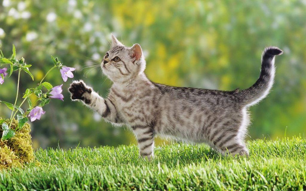 Если животное ходит на улицу, то насадки нельзя использовать