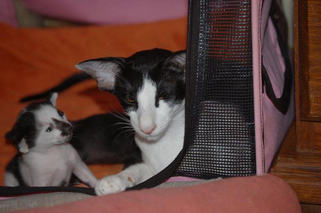 Для кошки с котятами необходимо оборудовать надежное укрытие
