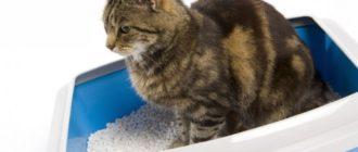 Корм для кошек с почечной недостаточностью