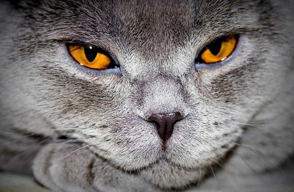 Почему кошка или кот сопит при дыхании