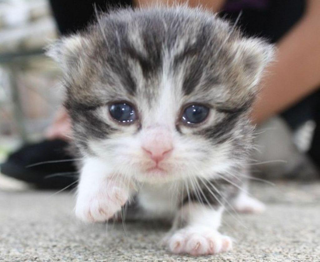 Открытки котенок плачет