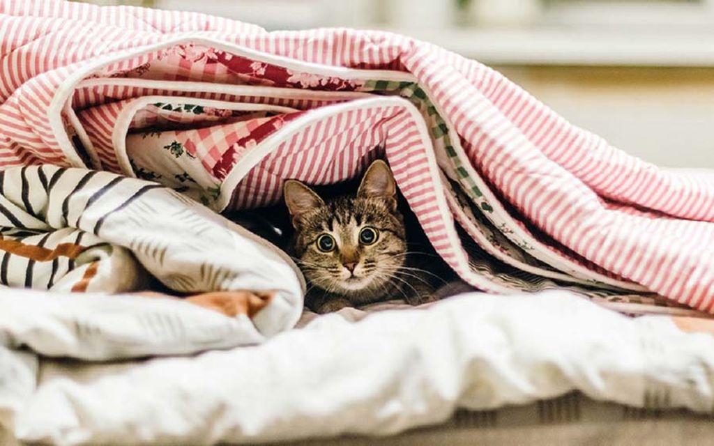 Повадки кошек