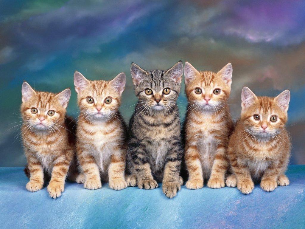 В год у кошки появляется в среднем 4 новорожденных