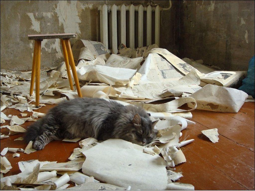 Кошка легко может отравиться остатками стройматериалов
