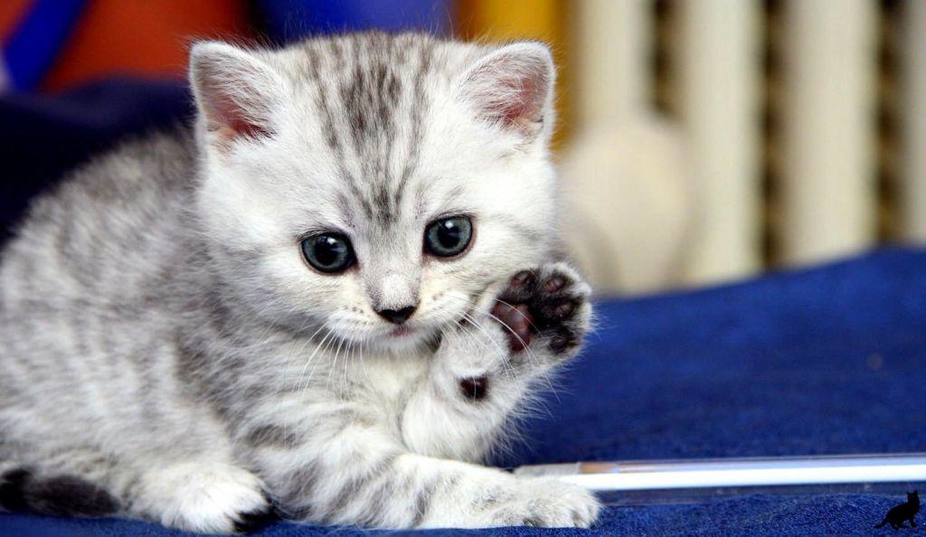Котенок – это ребенок с шерстью и хвостом, значит, относиться к нему нужно соответственно.