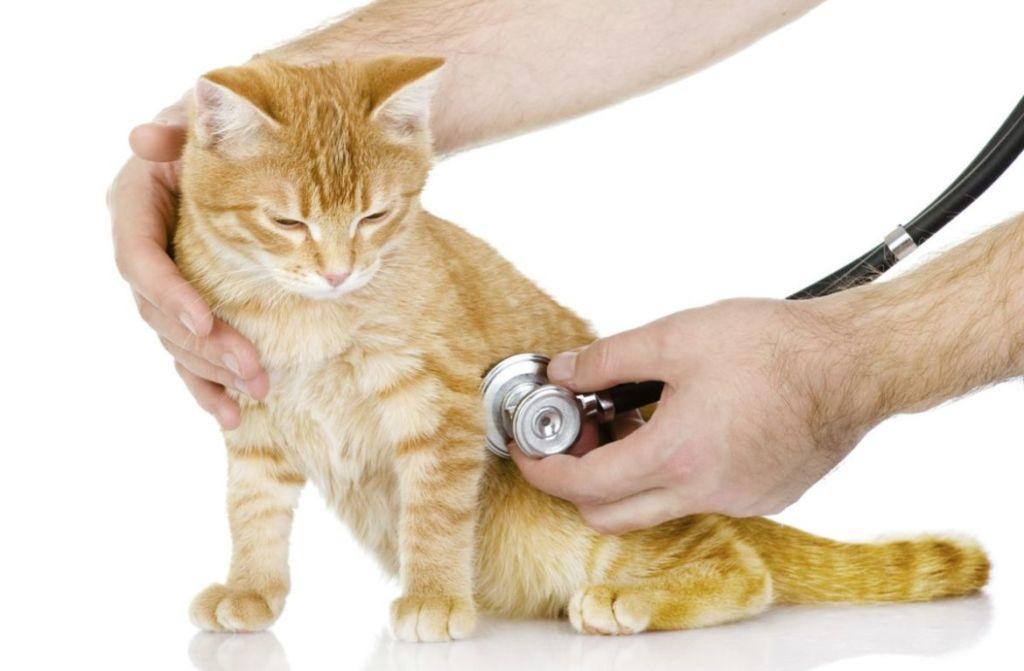 Профилактика может выражаться в регулярном посещении ветеринара