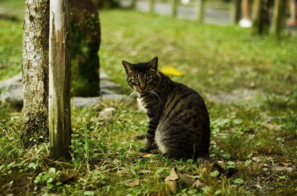 Домашняя кошка, попавшая на улицу, как правило, погибает