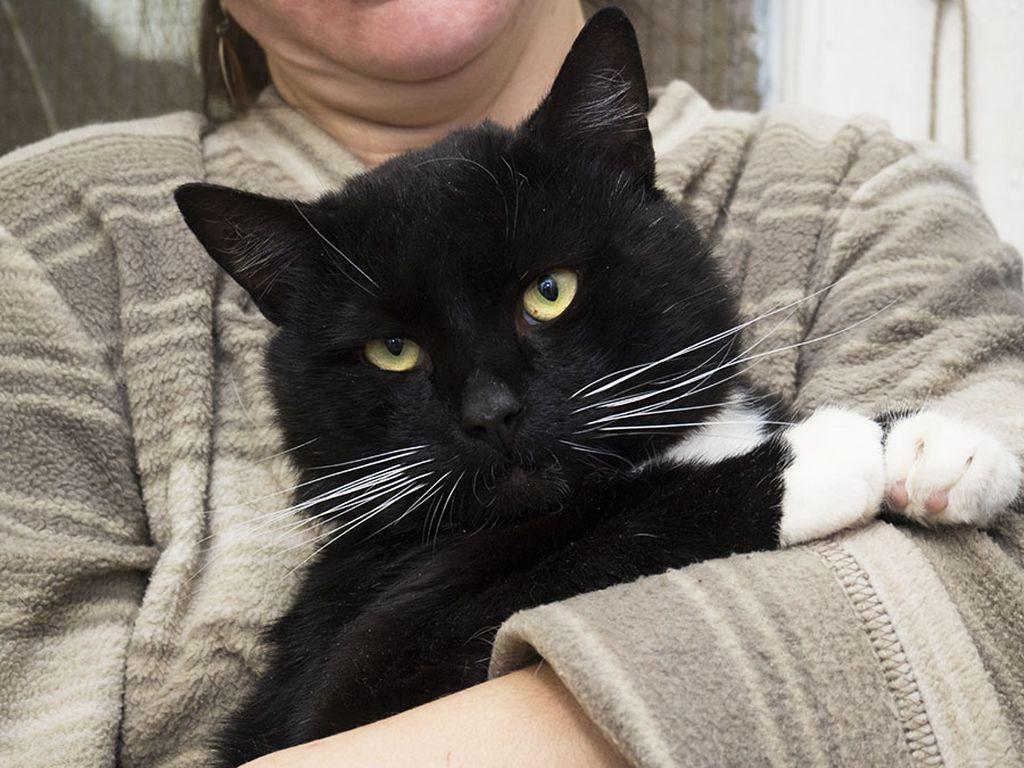 Кастрированные коты и стерилизованные кошки вырастают немного крупнее
