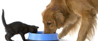 Можно ли кошке давать собачий корм