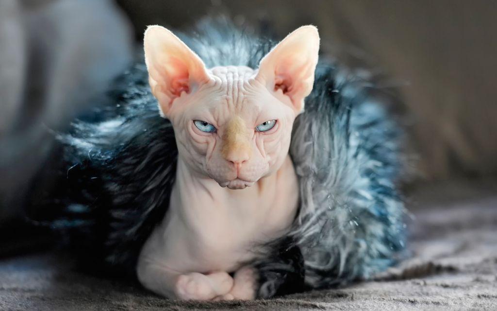 Не линяющая кошка