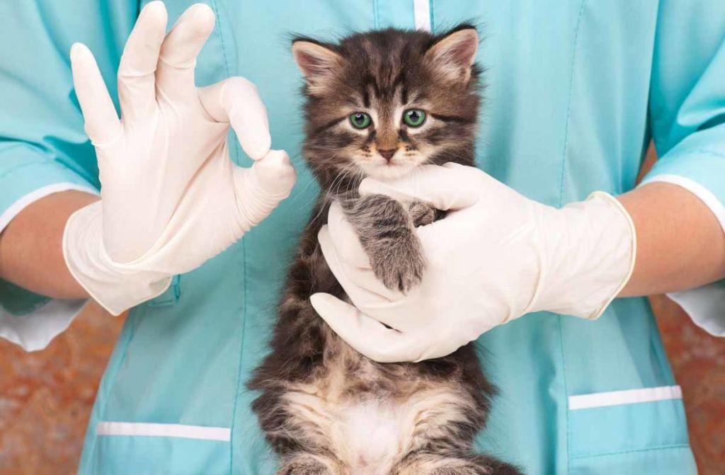 Установить аллергию у котенка может только специалист
