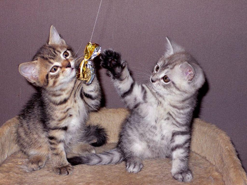 В природе не найдется двух кошек с одинаковым окрасом табби