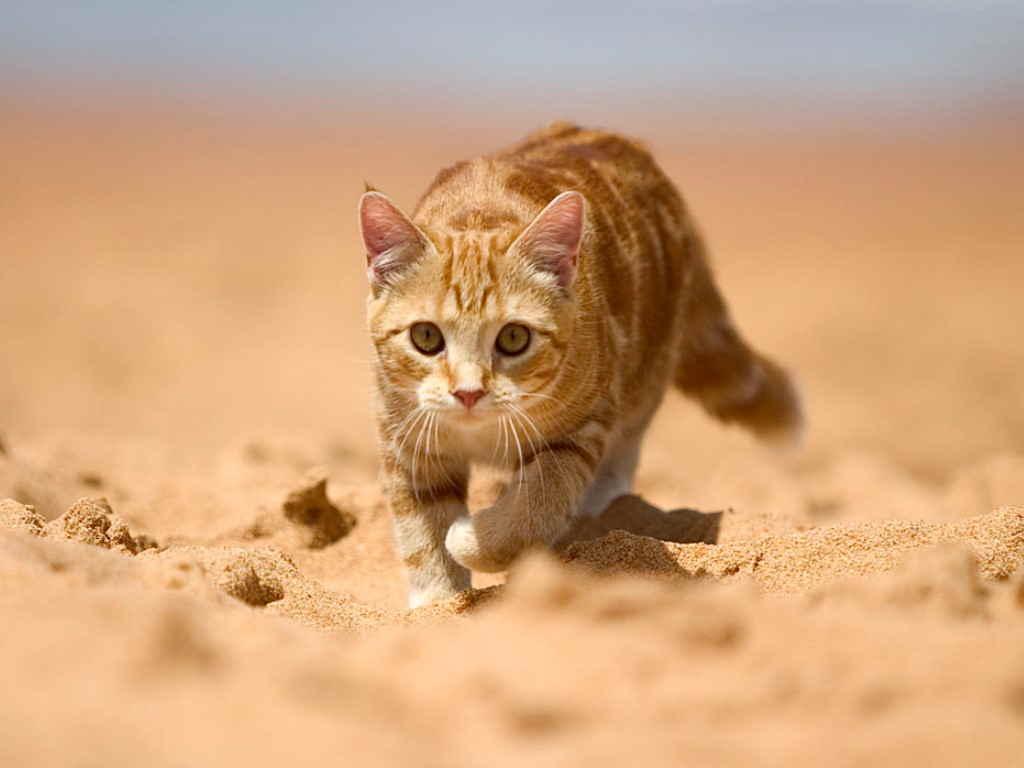 Почему у кота темная моча, причины и лечение