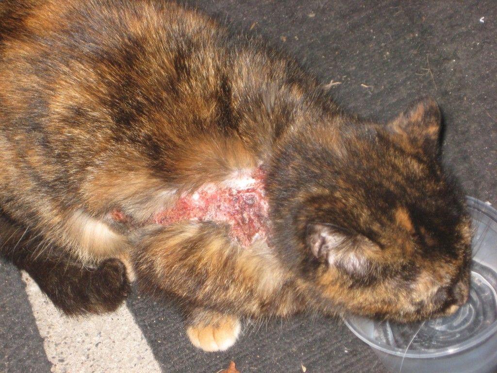Усыпление может быть необходимо при тяжелой болезни животного