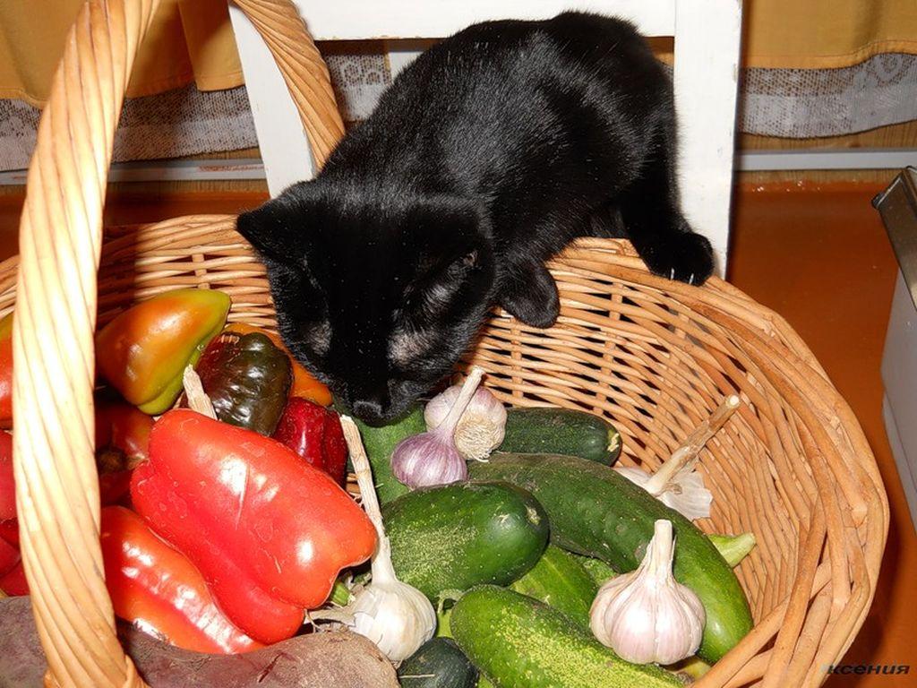 В рацион кота должны входить отварные овощи и зерновые