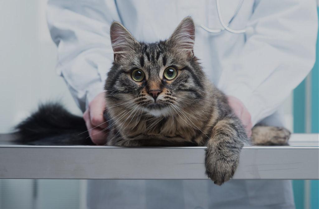 Ветеринарные врачи владеют специальными методами лечения и оказания помощи при отеке легких