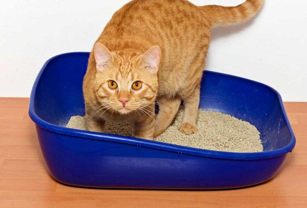 Обеспечьте животному комфортные условия и он быстро приучиться к лотку