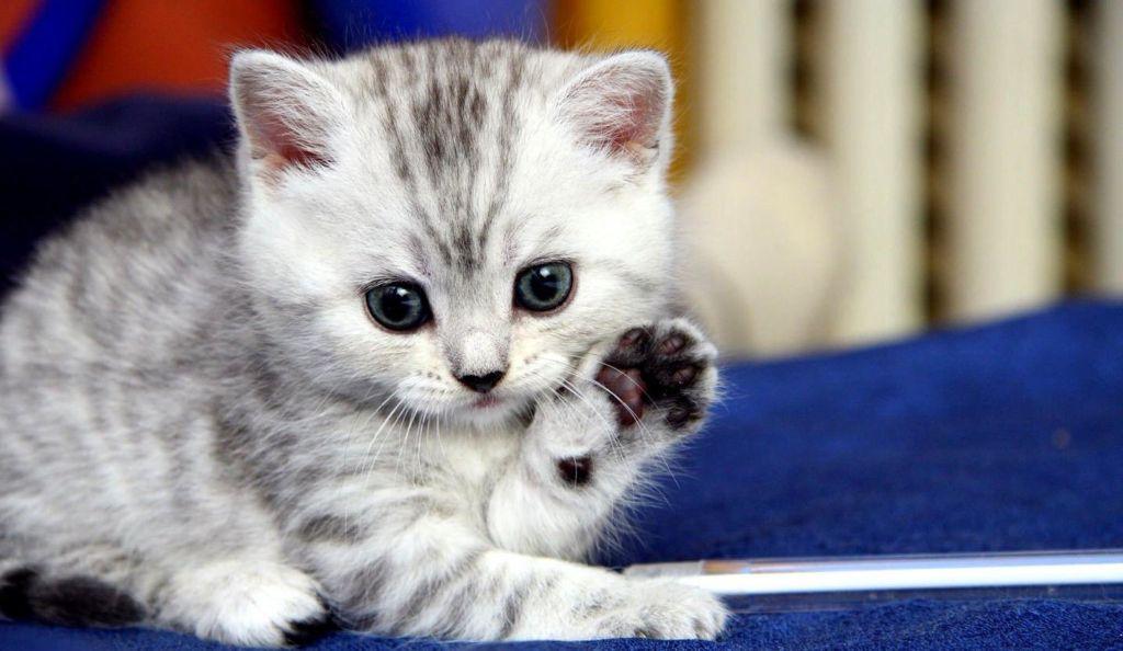Что делать в домашних условиях, когда запор у котенка