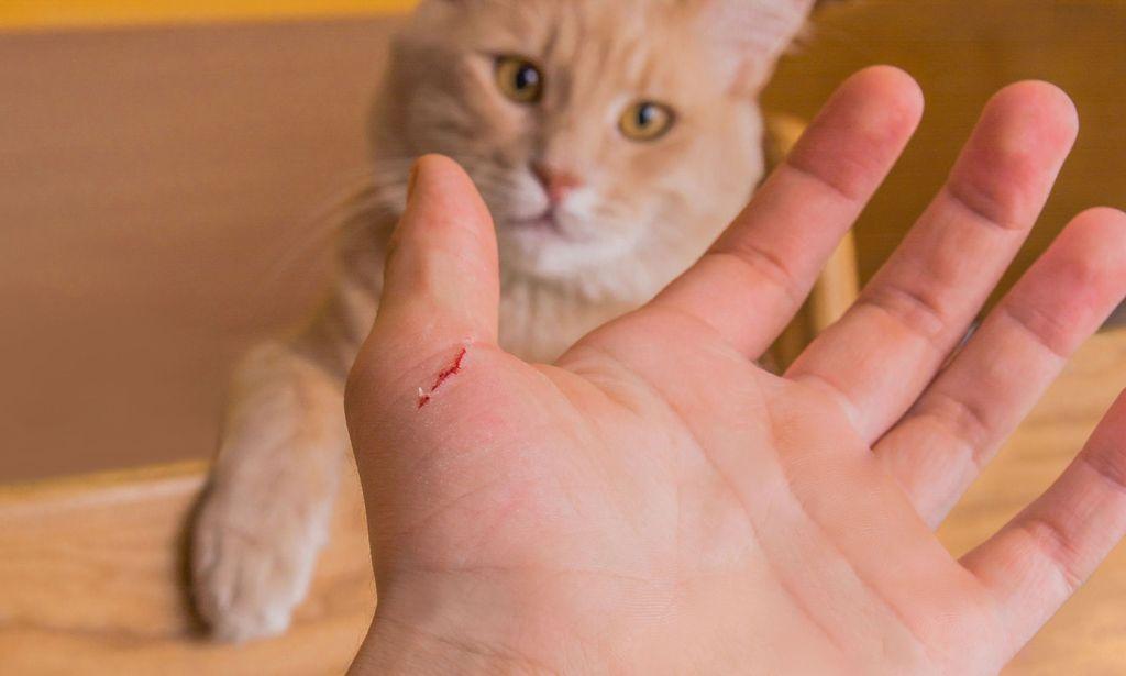 Что делать если поцарапала кошка