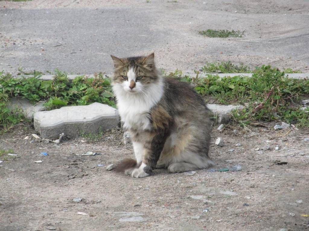 Заболевание может появиться даже у кошек, не выходящих на улицу