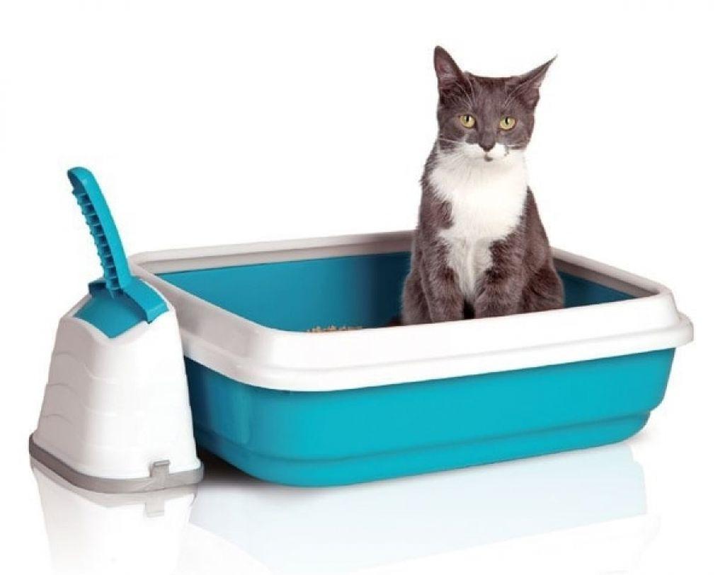 Тщательная уборка кошачьего лота относится к профилактическим мерам