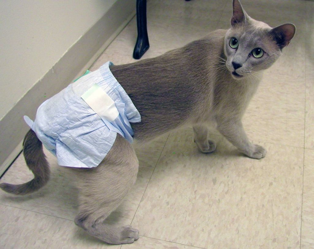 При мочекаменной болезни кошек рекомендуют корм с низкой зольностью