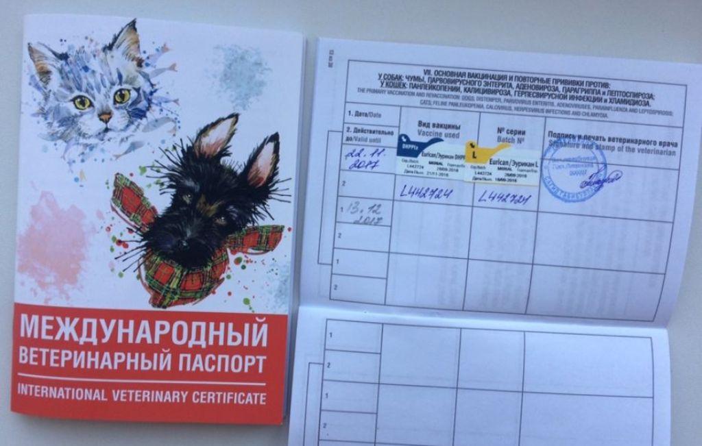 Где и как сделать ветеринарный паспорт собаке и кошке