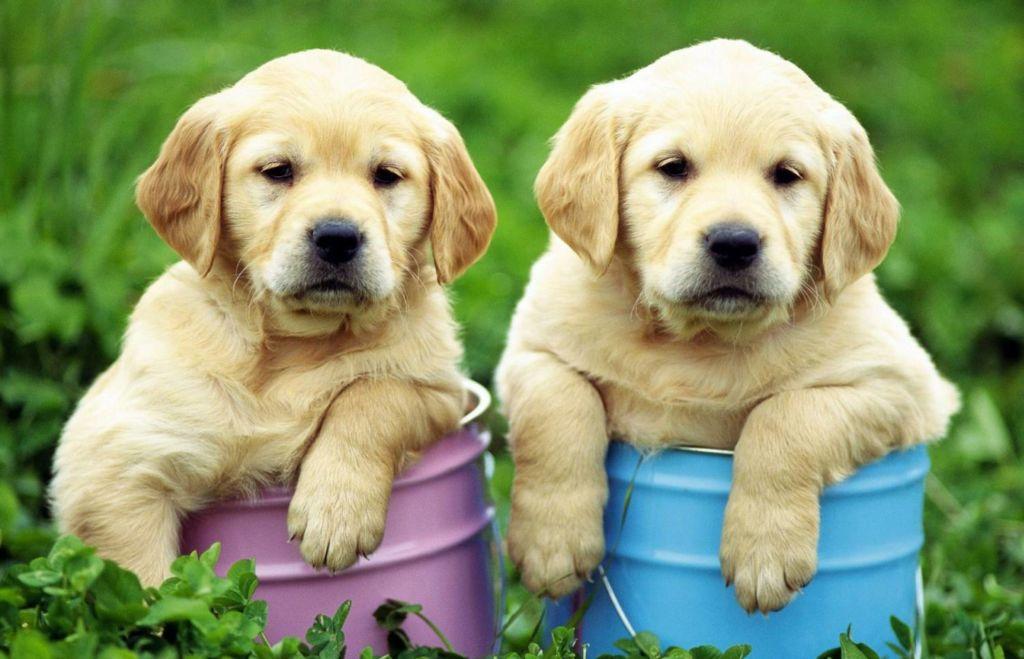 5 видов эктопаразитов у собак — что это такое