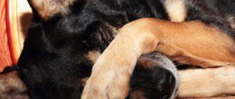 Отрава для собак и чем травят собак догхантеры