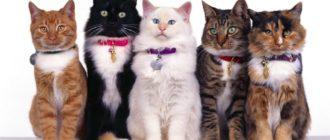 Кошки разных пород