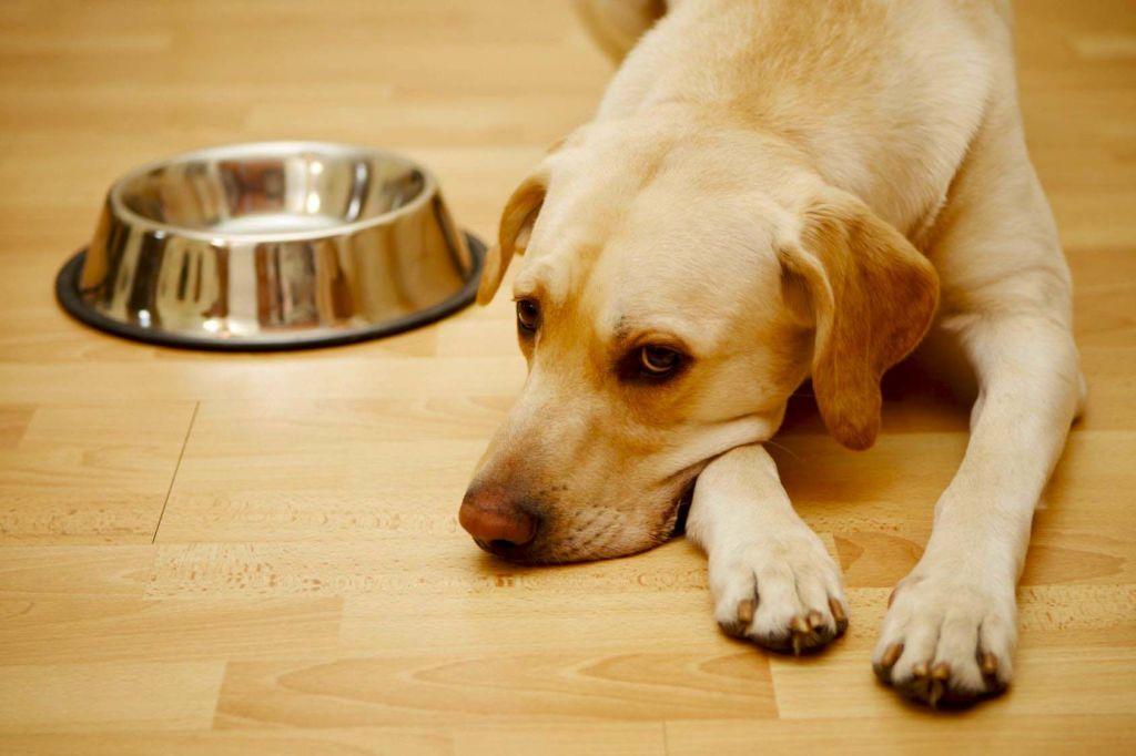 Самый главный симптом болезни у собаки - кашель