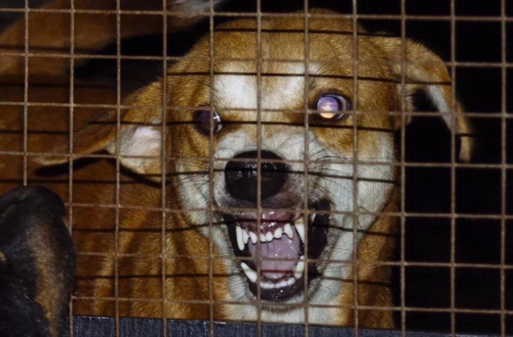 Болезнь может передаваться при контакте с больными животными