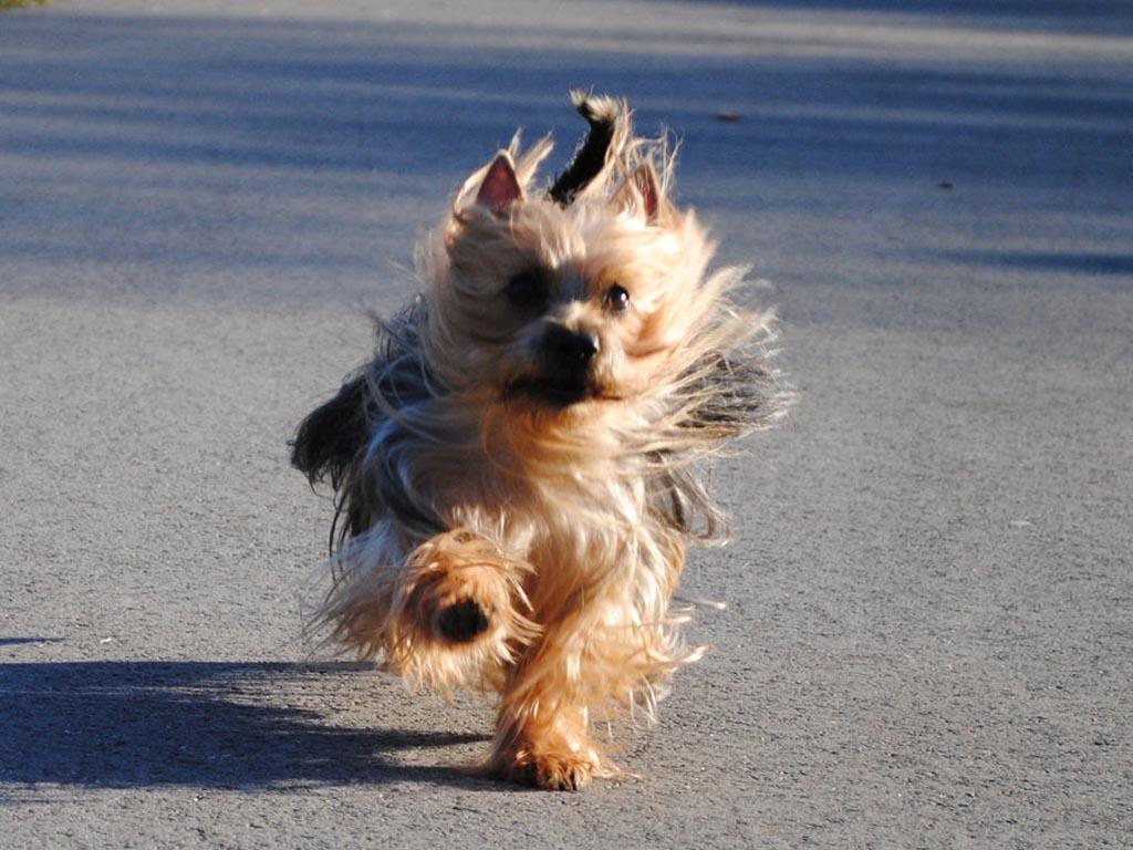 При своевременном уходе собака будет здорова и жизнерадостна