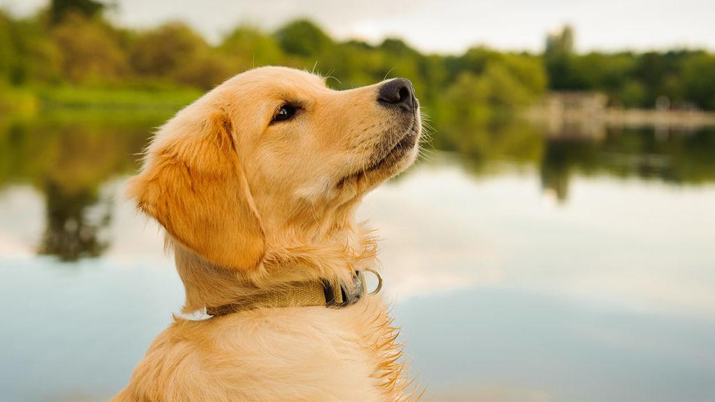 Характер у собаки мягкий, однако нужно показать собаке ее место