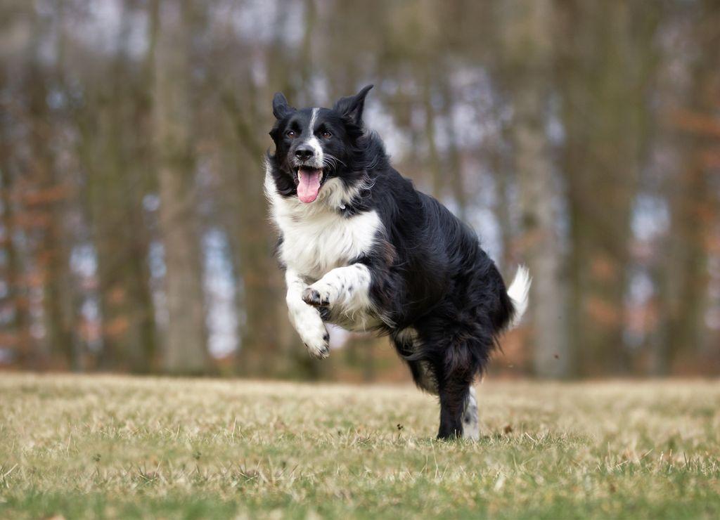 Недостаток физической активности делает собаку нервозной