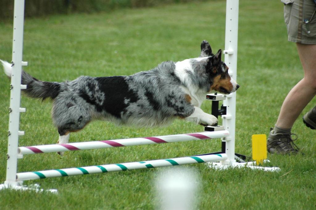 Дрессировке собаки поддаются довольно легко