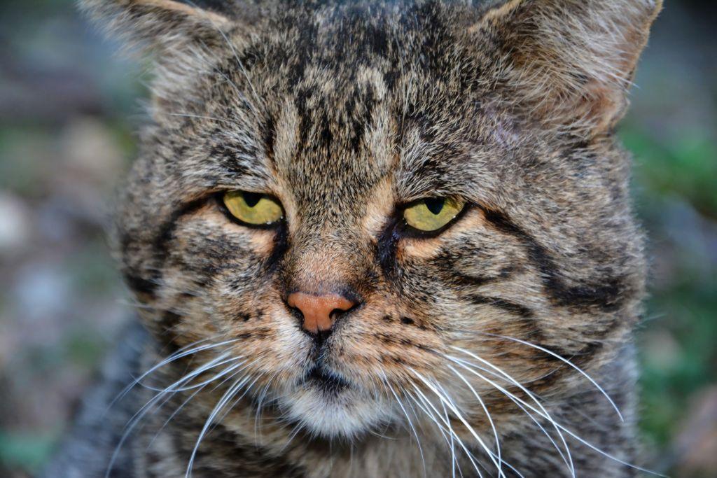 чем правильно кормить кота или кошку в домашних условиях