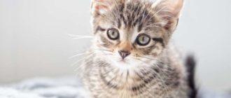 Таблица веса котенка по месяцам — сколько должен весить