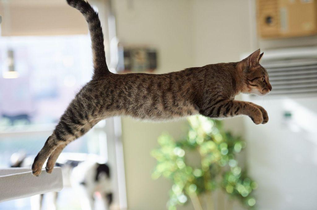 """Обучение команде """"прыжок"""" может происходить достаточно долго"""