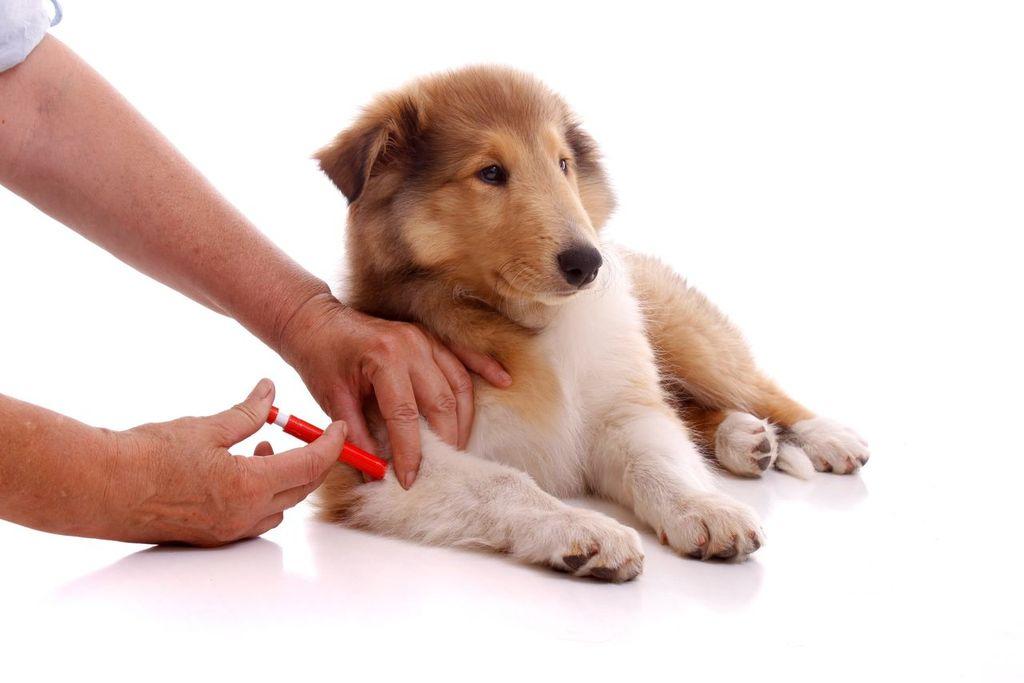 Эурикан для собак инструкция