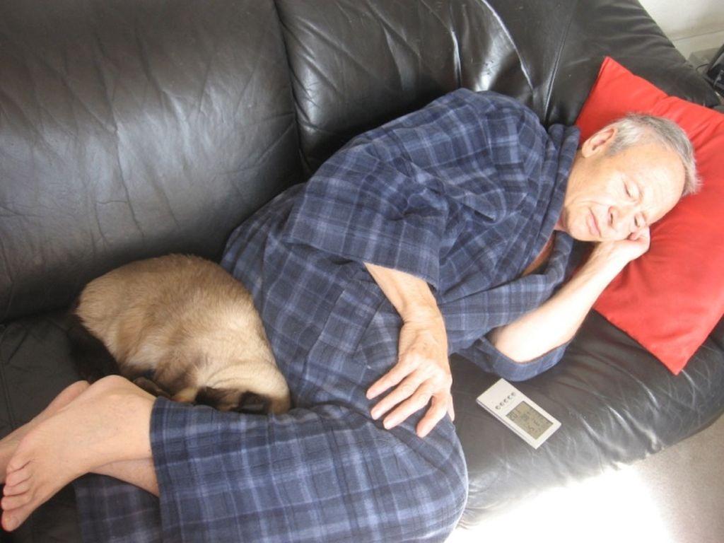Кот спит в ногах у человека, только когда доверяет ему