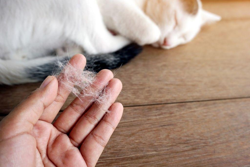 Кошек, не вызывающих аллергию, не существует