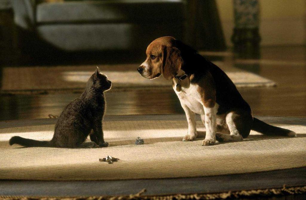 Сбавляя ход, коты смотрят на соседа, и показываю, что не претендуют на чужие владения