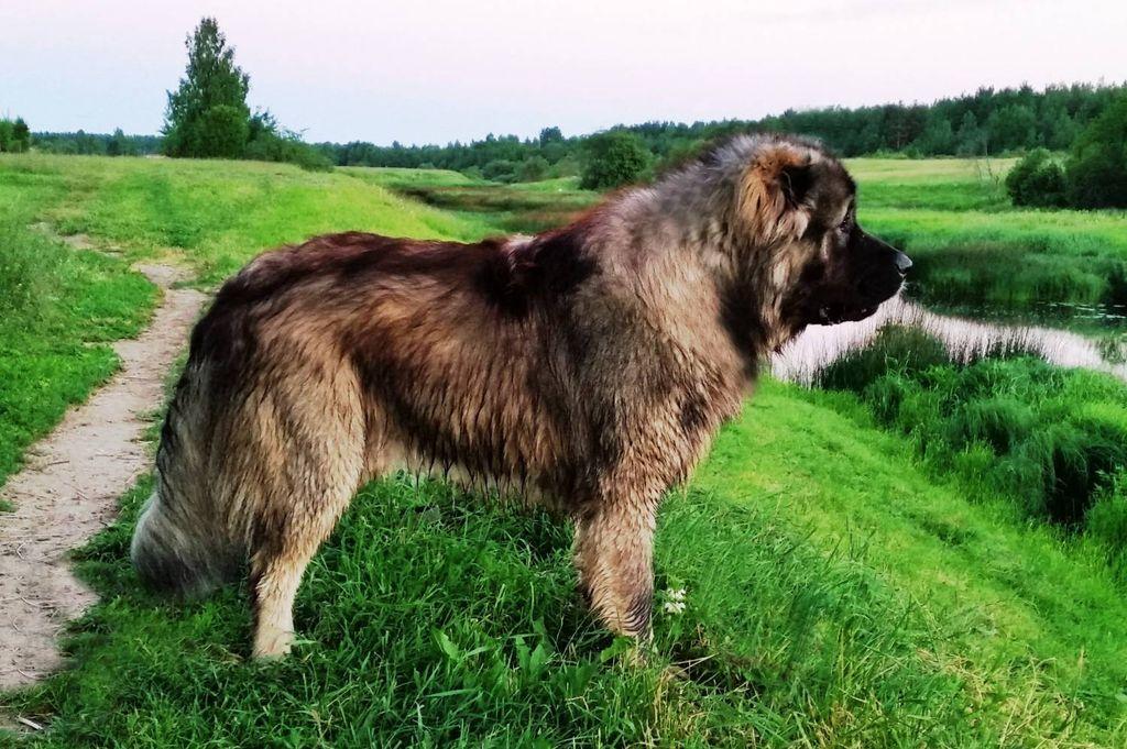 Выгуливать собаку необходимо ежедневно 2-3 раза в день
