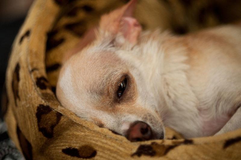 Симптомы и лечение мастита у собак в домашних условиях
