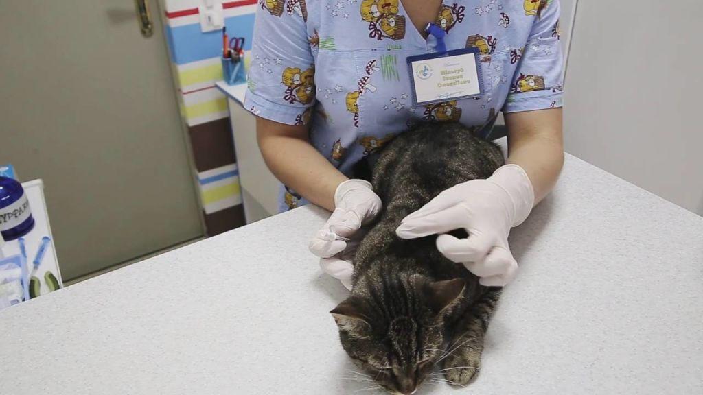 Чем опасны блохи для человека от кошки, собаки для людей: вши для животных